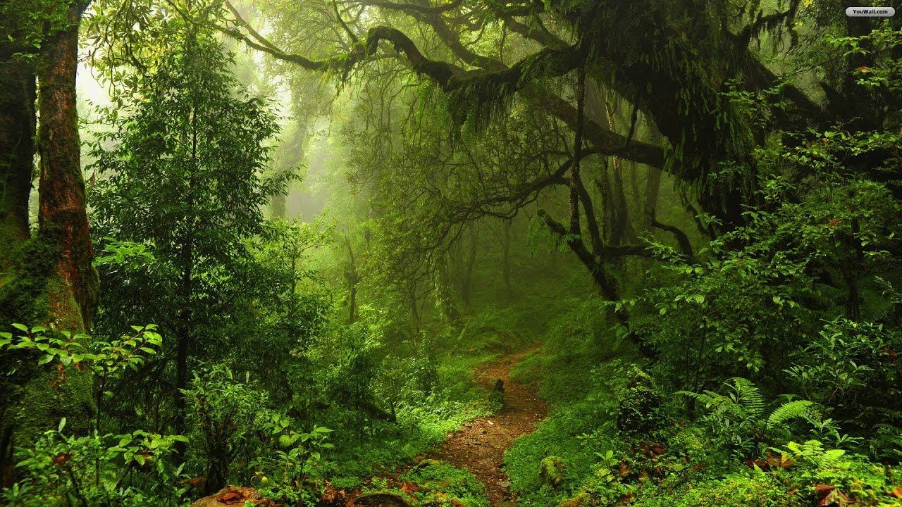 andaman forest